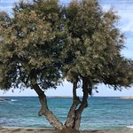 Roussos Beach Hotel Photo
