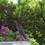 Fascinating bird in amongst the beautiful flowers on an OCW path