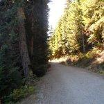 free trails