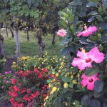 flowers and grape vines in the patio area