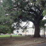 Oak tree and museum entrance