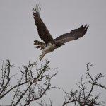 Gambar Fairmont Mara Safari Club