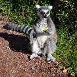 Foto de Parc Animalier de Sainte-Croix