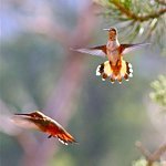 Hummingbirds love it here with 50 trees on the one acre property.