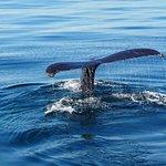 Photo of 7 Seas Whale Watch