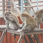 Foto de Zoological Gardens