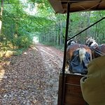 Horse drawn carriage ride through wooded property
