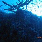 Photo of Diving Bluetribe Moofushi