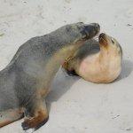 Photo of SeaLink Kangaroo Island