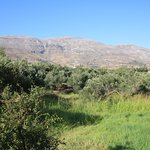Labyrinth Olive grove at rear