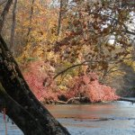 Fall in Landsford Canal State Park