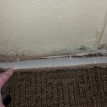 Mold along the base of wall under AC air intake, wall/carpet are wet