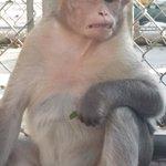 Bild från Suncoast Primate Sanctuary Foundation, Inc.