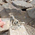 Hörnchen am Strand :)