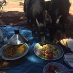 Herd of goats dropped by during lunch and helped themselves