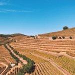Fotografia de Jorge Barefoot - Wine & Tours