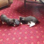Resident kittens