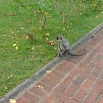 Monkeys in the mini forest like expanse