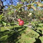 Touring the Orchard
