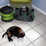 My happy cat! Room #2, Bodega Harbor Inn