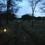 Evening view of path from dining tent to personal tents. Note the thicker forestry in the backgr