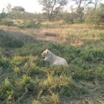 Kambaku Safari Lodge Foto