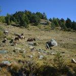 A media subida, campesina con sus vacas. 1700m