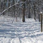 winter walk or ski