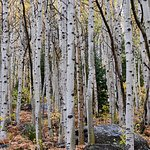 Jared's knowledge and experience turned a miserable grey evening into terrific aspen shots