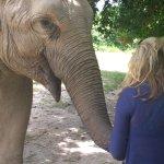 Photo de Phnom Tamao Wildlife Rescue Center