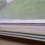 2 dead hornets on window sill - second room