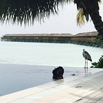 Photo de Vilamendhoo Island Resort & Spa