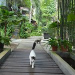 Garden and cats