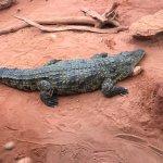Photo of La Ferme aux Crocodiles