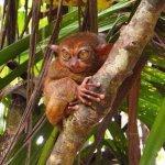 World's smallest primate