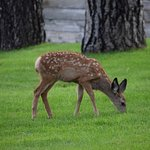 Deer in town at the park.