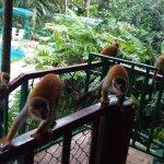 Jungle Villa resmi