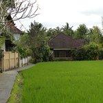 صورة فوتوغرافية لـ Kebun Indah