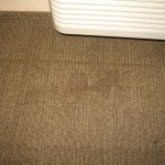 carpet stain (one of many)