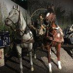 Horses in Normandy