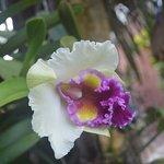 Photo of The Hoi An Orchid Garden Villas