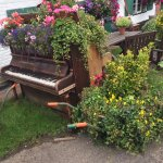 Quaint garden with old pianos covered in flowers