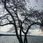Billede af Skaneateles Lake