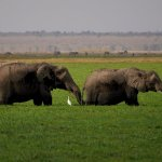 lush marshes where elephants bath with birds