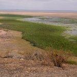 lush marsh and arid dusty land