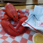 Fresh, steamed lobster