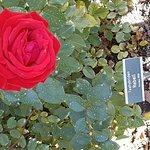 Photo of Rose Garden (Rosengarten)