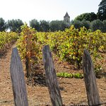 Vignoble de Lérins