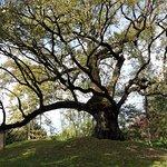 Parco Villa Colloredo Venier