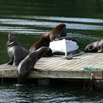 Photo de Archipelago Wildlife Cruises